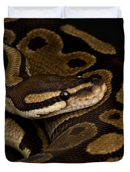 A Ball Python Python Regius Duvet Cover