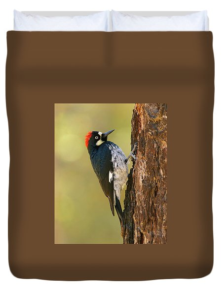 Acorn Woodpecker Duvet Cover by Doug Herr