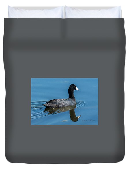 American Coot Swiming Duvet Cover by Edward Peterson