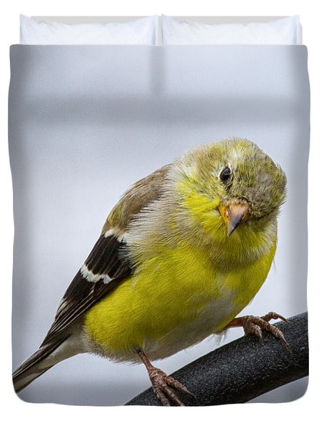 American Goldfinch Duvet Cover by Brian Caldwell