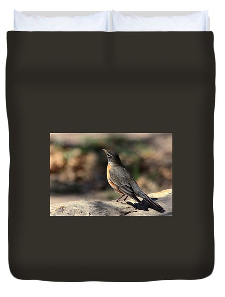 American Robin On Rock Duvet Cover by Sheila Brown