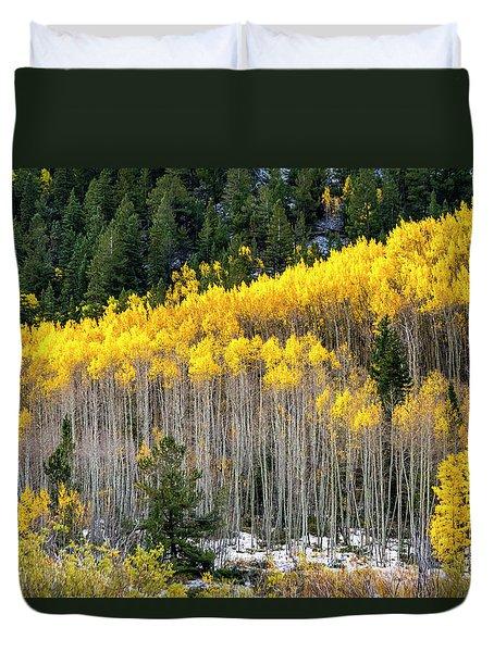 Aspen Trees In Fall Color Duvet Cover