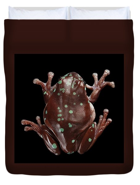 Australian Green Tree Frog, Or Litoria Caerulea Isolated Black Background Duvet Cover by Sergey Taran