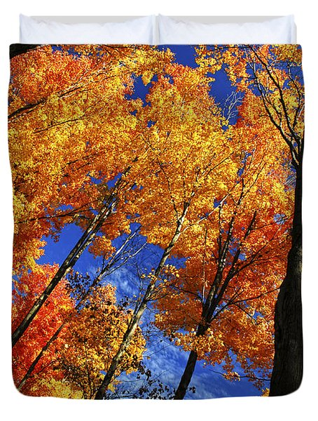 Autumn Forest Duvet Cover by Elena Elisseeva