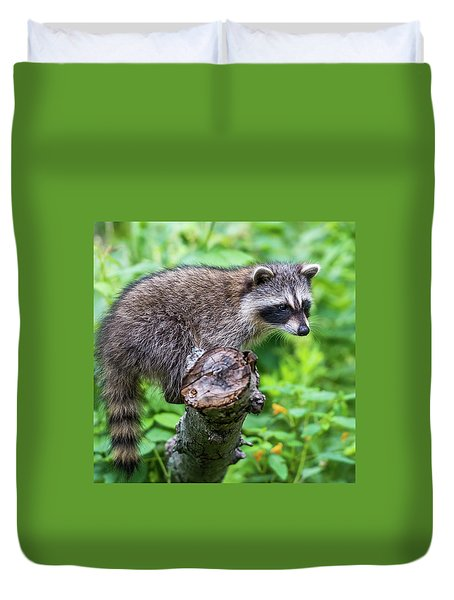 Duvet Cover featuring the photograph Baby Racoon by Paul Freidlund