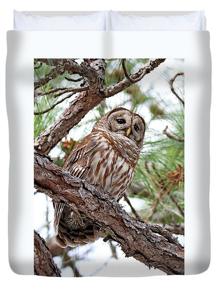 Barred Owl In Pine Tree Duvet Cover