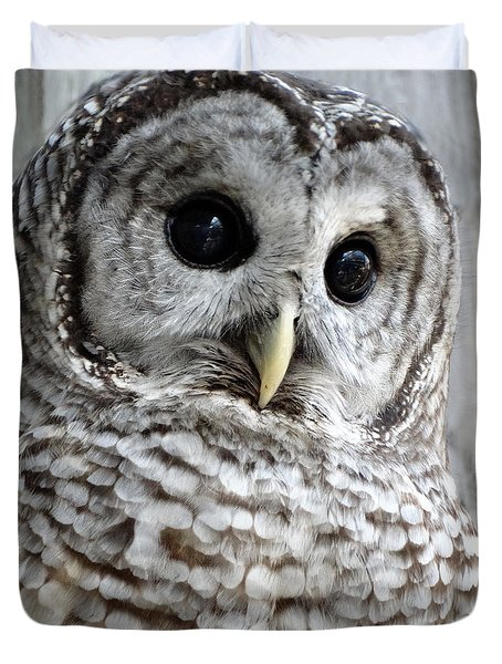 Barred Owl Duvet Cover by Rebecca Overton