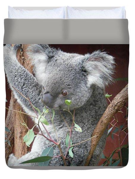 Beady Eyed Koala Duvet Cover