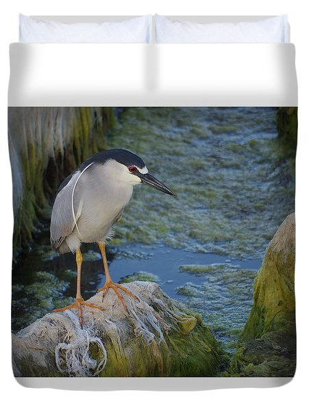 Black Crowned Night Heron Duvet Cover by Greg Graham