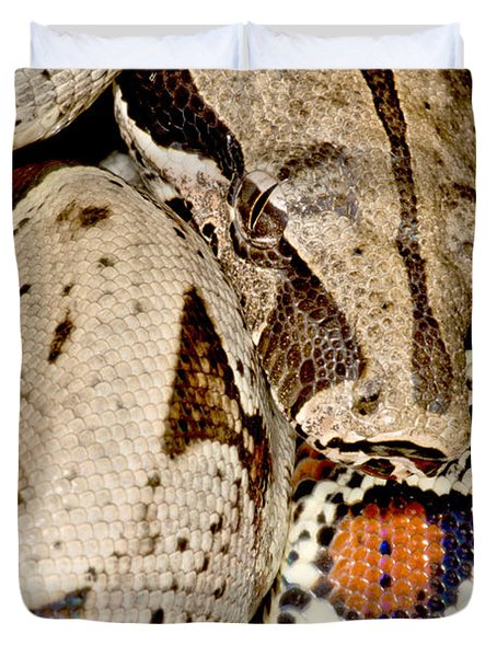 Boa Constrictor Duvet Cover by Dant� Fenolio