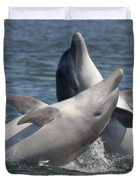 Bottlenose Dolphins  - Scotland  #15 Duvet Cover