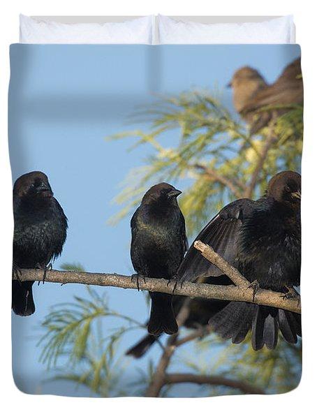 Brown-headed Cowbirds Duvet Cover