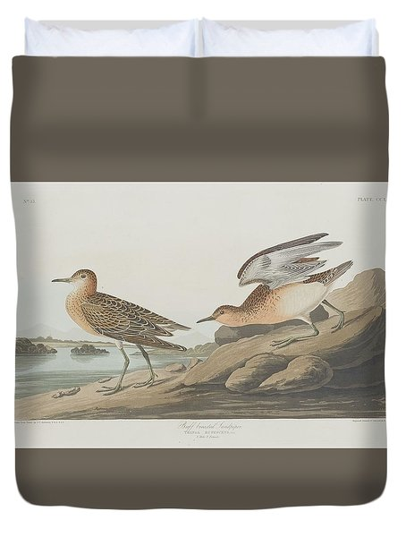 Buff-breasted Sandpiper Duvet Cover by Anton Oreshkin