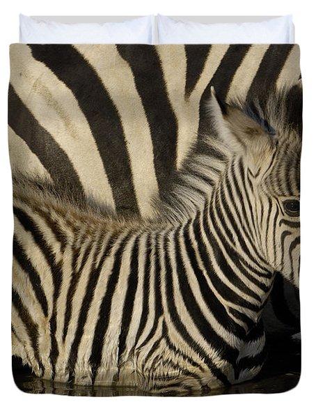 Burchells Zebra Equus Burchellii Foal Duvet Cover