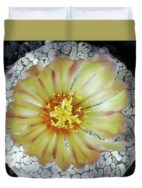 Cactus Flower 2 Duvet Cover by Selena Boron