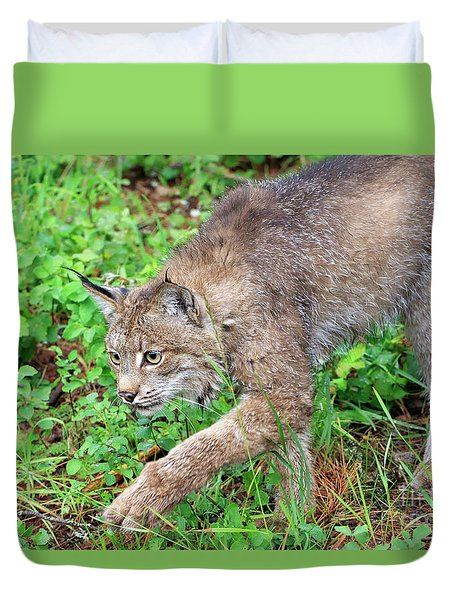 Canada Lynx Lynx Canadensis Duvet Cover by Louise Heusinkveld