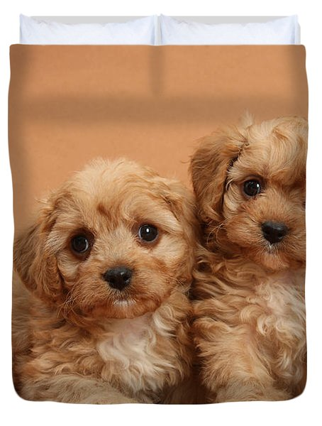 Cavapoo Pups Duvet Cover by Mark Taylor