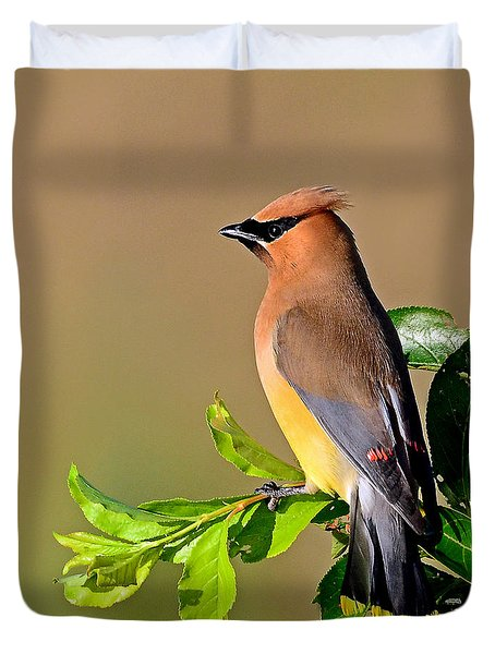 Cedar Waxwing Duvet Cover by Rodney Campbell