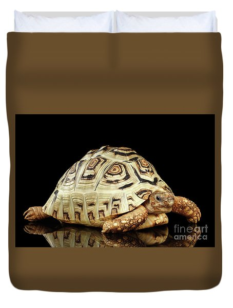 Closeup Leopard Tortoise Albino,stigmochelys Pardalis Turtle With White Shell On Isolated Black Back Duvet Cover by Sergey Taran