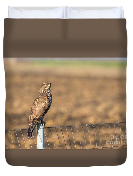 Common Buzzard Along The Highway Nis - Budapest Duvet Cover