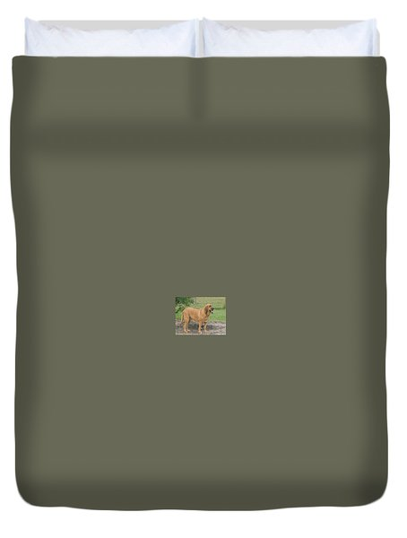 Cujo At The Park Duvet Cover by Val Oconnor