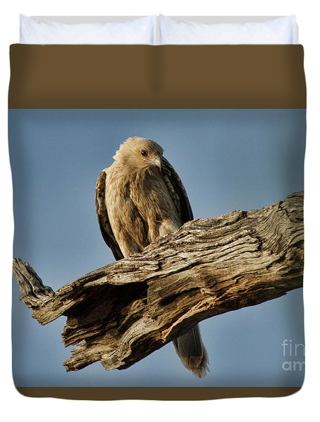 Curious Duvet Cover by Douglas Barnard