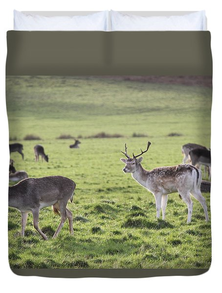 Deer In Richmond Park Duvet Cover