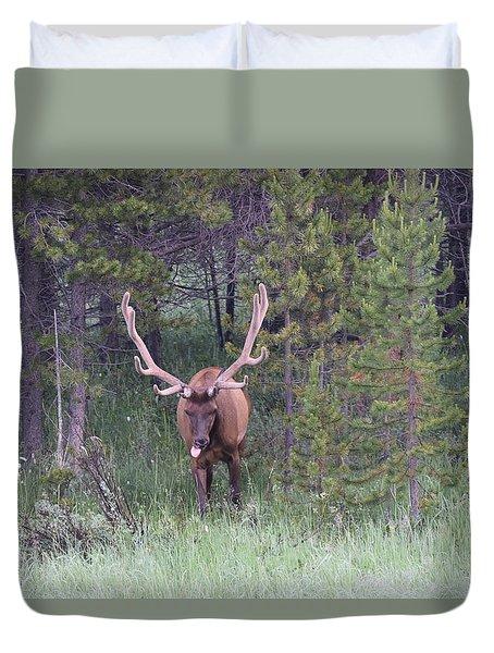 Bull Elk Rocky Mountain Np Co Duvet Cover