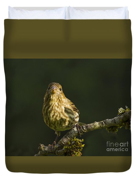 Duvet Cover featuring the photograph Female House Finch by Inge Riis McDonald
