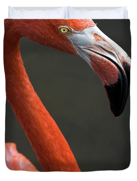 Flamingo Duvet Cover by Christopher Holmes