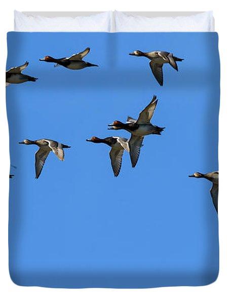 Flock Of Redhead Ducks In Flight Duvet Cover
