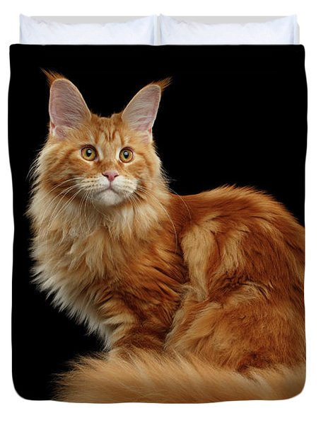 Ginger Maine Coon Cat Isolated On Black Background Duvet Cover