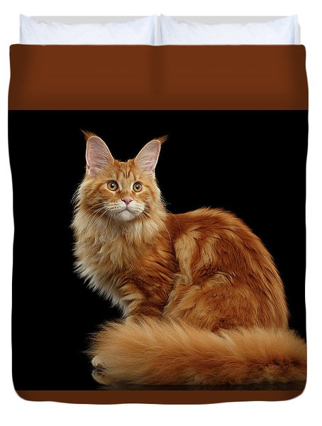 Ginger Maine Coon Cat Isolated On Black Background Duvet Cover by Sergey Taran
