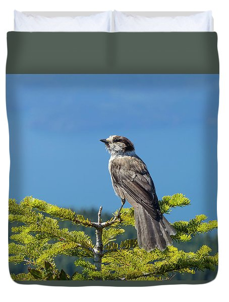 Gray Jay Duvet Cover