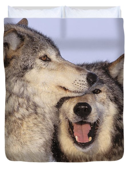Gray Wolves Duvet Cover by John Hyde - Printscapes