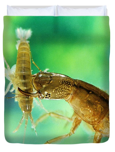 Great Diving Beetle Duvet Cover
