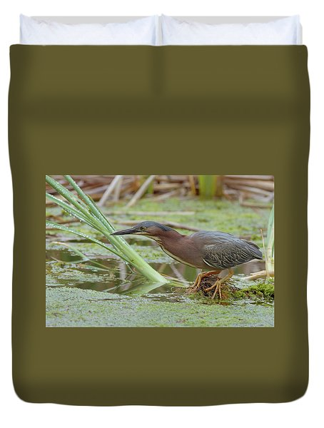 Green Heron Duvet Cover by Doug Herr