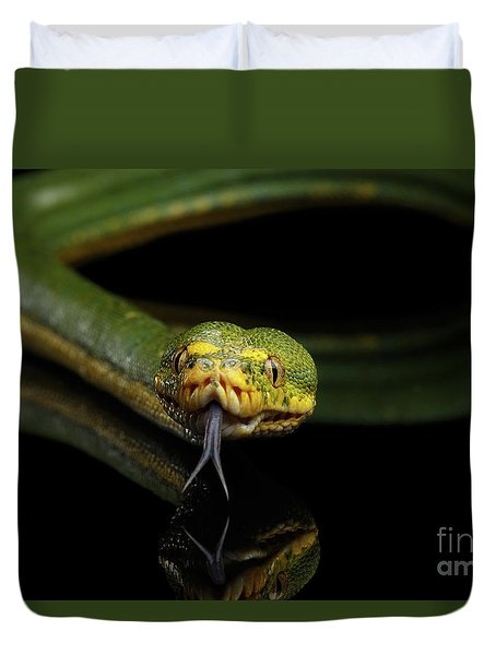 Green Tree Python. Morelia Viridis. Isolated Black Background Duvet Cover