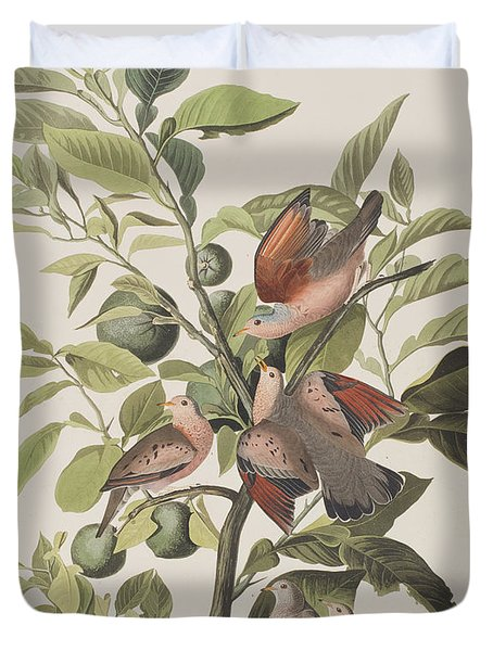 Ground Dove Duvet Cover by John James Audubon