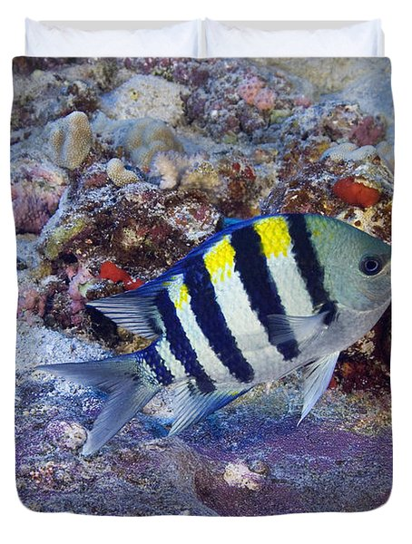 Hawaii, Marine Life Duvet Cover by Dave Fleetham - Printscapes