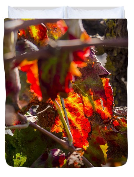 Hot Autumn Colors In The Vineyard 05 Duvet Cover