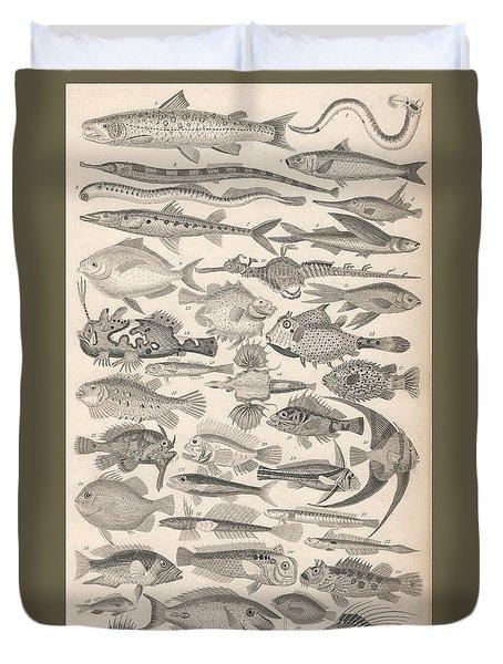 Ichthyology Duvet Cover by Rob Dreyer