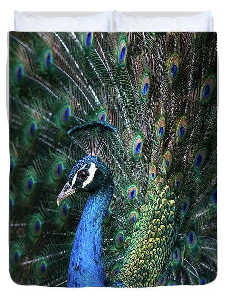 Indian Peacock With Tail Feathers Up Duvet Cover