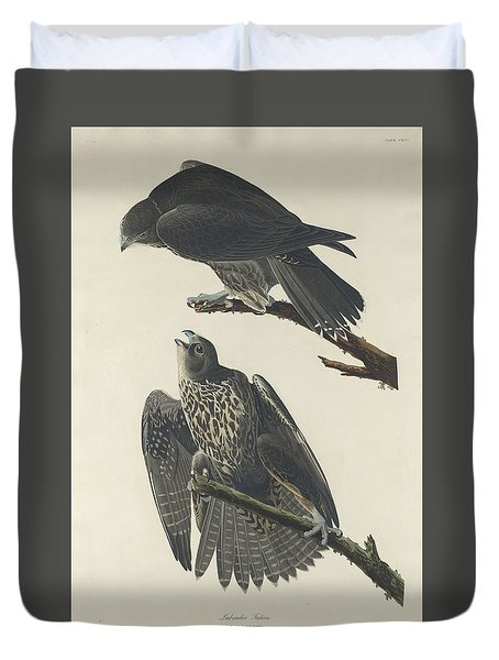 Labrador Falcon Duvet Cover by Rob Dreyer