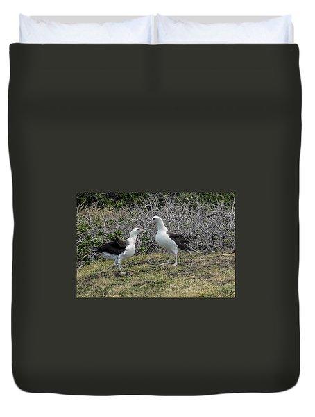 Laysan Albatross Hawaii #2 Duvet Cover