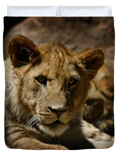 Lion Cub Duvet Cover