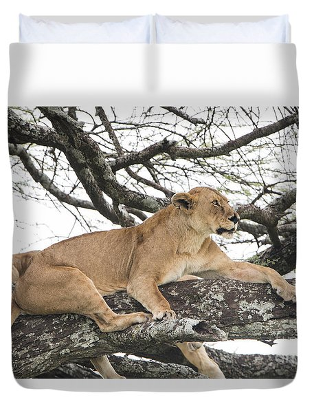 Lions In A Tree Duvet Cover
