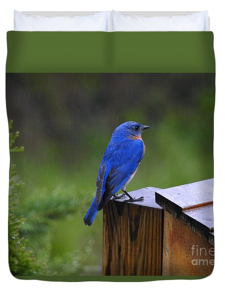 Male Bluebird  Duvet Cover by Brenda Bostic