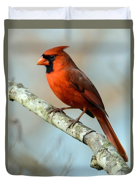 Male Cardinal Duvet Cover by Debbie Green