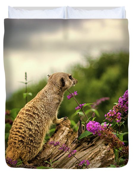 Meerkat Lookout Duvet Cover